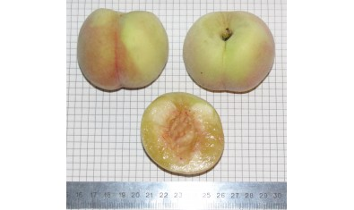 Персик Аника-2