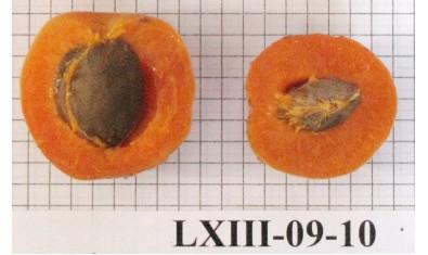 Абрикос LXIII-09-10