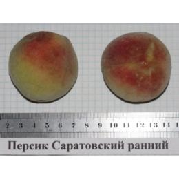 Персик  Саратовский ранний