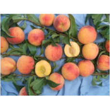 Персик  Юбилейный ранний