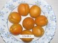 Саратовский гигант - самый крупный Саратовский сорт, средний вес 60 г., максимальный - 70 г. Высокие вкусовые качества. Урожайность пока ежегодная. Устойчив к болезням. цветение позднее. Реализация ожидается с 2023 года.