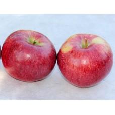 Яблоня осенн. Орловское полосатое