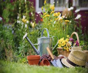 Саратовская облдума поддержала федеральный законопроект о садоводстве
